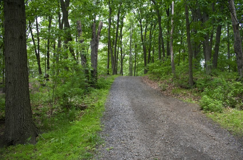 Image of a trail Cheesequake state park hiking