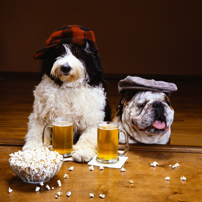 Image of two dogs drinking beer at a brewery