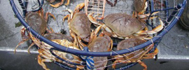 Places To Go Crabbing with Kids in NJ