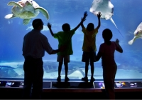 Adventure Aquarium is the best aquarium in New Jersey for kids