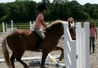 Seaton Hackney Stables Horseback Riding Camps in NJ