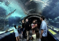 Adventure Aquarium best family attractions in NJ