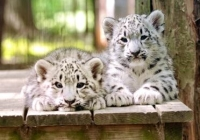Cape May County Park & Zoo best free attractions in New Jersey