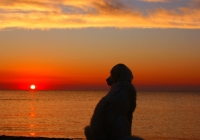 Cape May, New Jersey dog friendly getaways in NJ