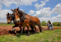Howell Living History Farm best free attractions in NJ