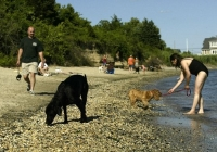 Pet-Friendly Beaches in NJ