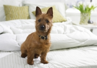Pet-Friendly Hotels in NJ