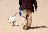 Point Pleasant beaches in NJ that are pet friendly
