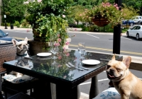 The Bernards Inn NJ pet friendly restaurants