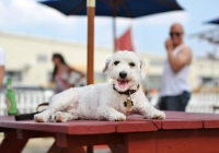 The Wonder Bar dog friendly restaurants in New Jersey
