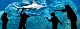 NJ Aquariums