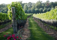 Beneduce Vineyards Top 50 Attractions in Hunterdon County NJ