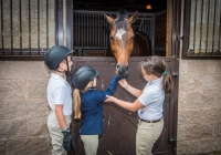 Bergen Equestrian Center Horseback Riding Lessons in Northern NJ
