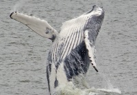 Cape May Whale Watchers Cruise for Kids in New Jersey