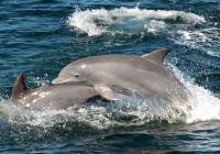 Cape May Whale Watcher Best New Jersey Attractions