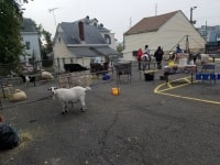 Cloverland Entertainment Traveling Pony and Petting Zoo Parties in New Jersey