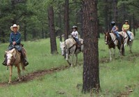 D & D Stables horseback trail riding in Atlantic County NJ