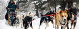 Dog Sledding in NJ