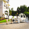 Dream Horse Carriage Company horse and carriage rides NJ