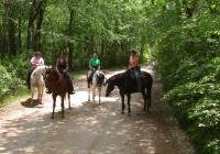 Good Times Farm horseback riding lessons in Monmouth County NJ
