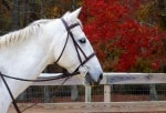 Hunter Brook Horse Farm year-round party places in Monmouth County NJ