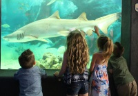 Jenkinson's Aquarium Kid-Friendly Attractions in Ocean County NJ