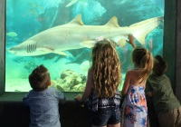 Jenkinson's Aquarium kid-friendly getaway attractions in NJ