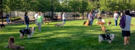 Best Dog Parks in NJ