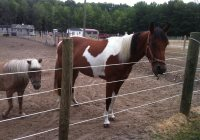 Okey Doke Ranch Cool Horseback Riding Trails in NJ