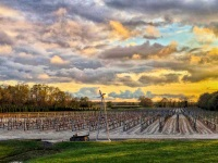 Plagido's Winery best attractions in Atlantic County NJ