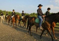 Seaton Hackney Stables off-site trail rides in Morris County NJ