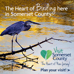 Somerset County Tourism Bird Watching in NJ