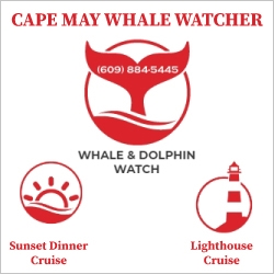 Cape May Whale Watcher Top Attractions in NJ