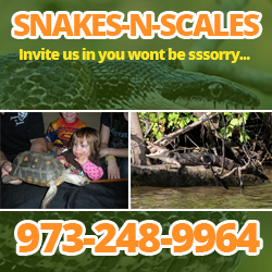 Snakes n Scales Fun with Kids  Attractions in NJ