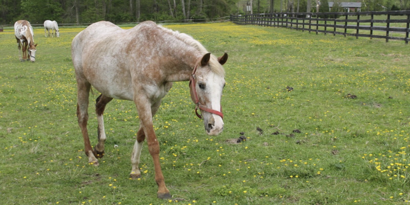 Image of a horse on the ranch North View Farm in Bordentown Twp that offers horseback riding