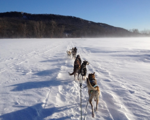 Northern Exposure Outfitters Dog Sledding MA