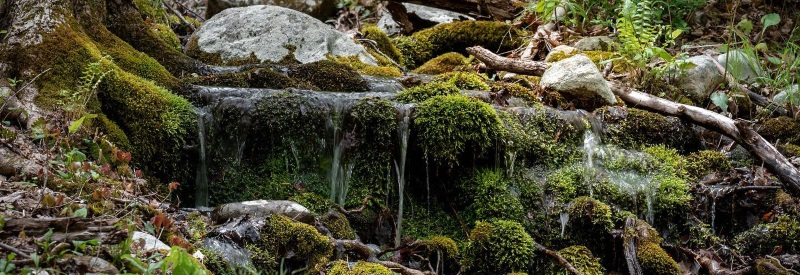 Photo of a little waterfall among mossy rocks and fallen branches