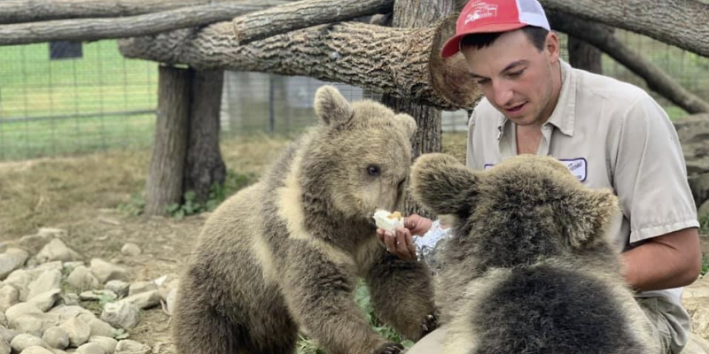 Image of a zookeeper feeding two baby bears at Space Farms Zoo and Museum one of the coolest places for kids to have fun in NJ