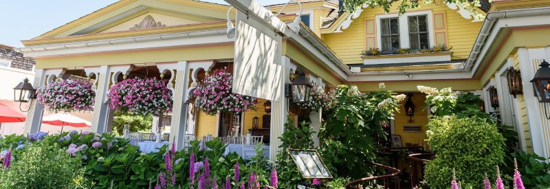 Photo of the front of The Gables a yellow house with a oak tree in front with lavender growing.