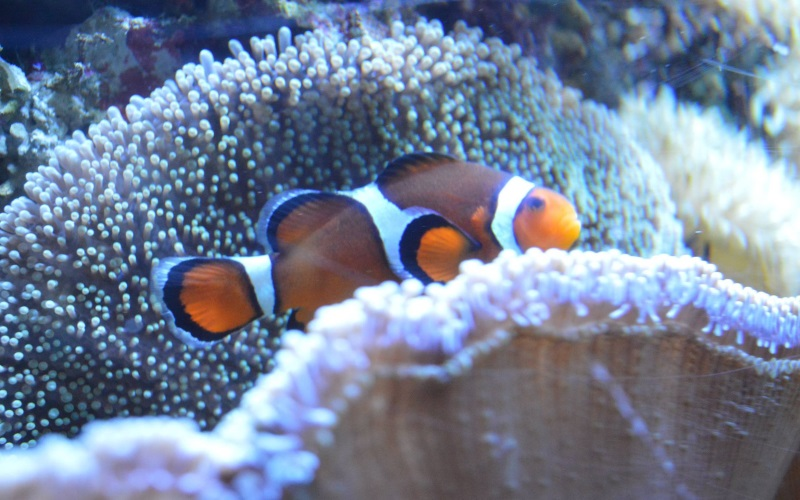 There is so many types of fish at the Atlantic City Aquarium -come to this South Jersey aquarium and see it all.