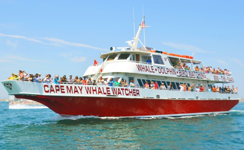Cape May Whale Watcher Cape May NJ Kids Cruises in NJ