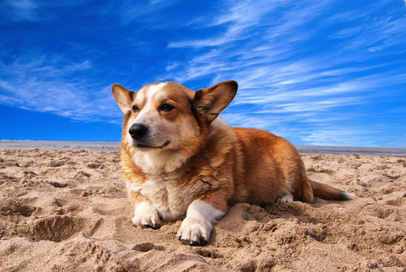 Pet-Friendly Beaches in Southern NJ Somers Point