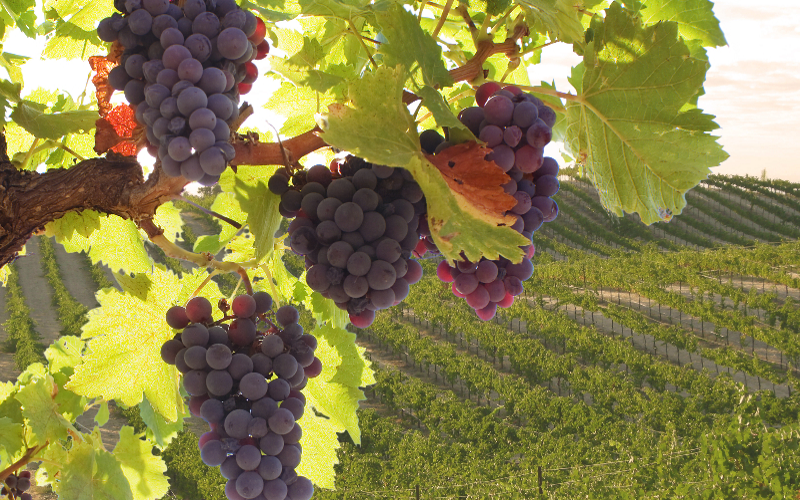 Grape Expectations in Bridgewater is a place where you can make your own wine!