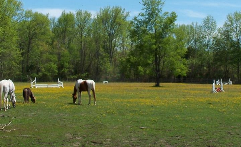 Hunter Brook Horse Farm Kids Toddler Parties in Monmouth County