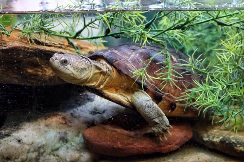 Snakes N Scales and Turtle Tales Teen Reptile Parties in NJ