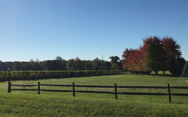 White Horse Winery offers a beautiful view while sipping on a great tasting of their homemade wines.
