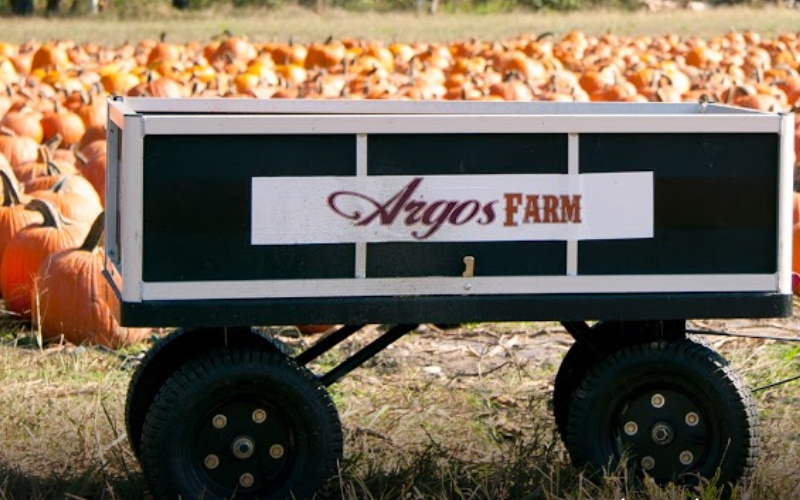 Image of argos farm filled with pumpkins