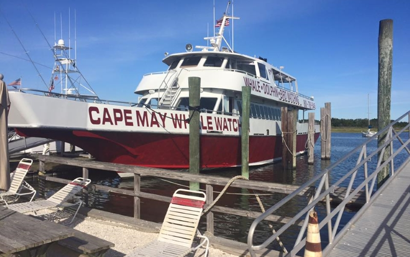 Cape May Whale Watcher Family-Friendly Top Jersey Shore Attractions