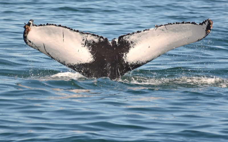 Cape May Whale Watching First Date Ideas NJ
