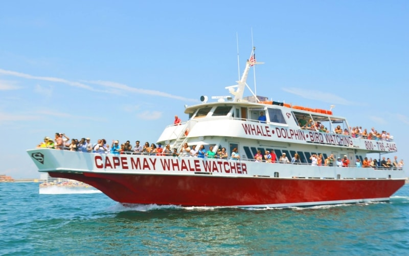 Cape May Whale Watchers Day Trips for Kids in Southern NJ